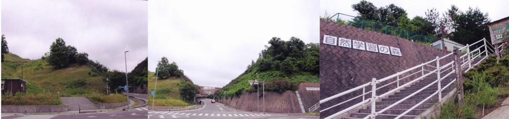 田和山の森ご案内