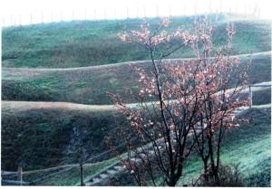 春風の丘-1