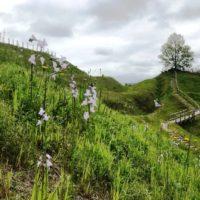 田和山環濠周辺の花々