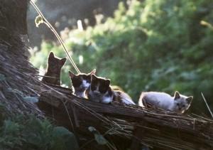 田和山に住む猫の親子