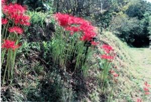 田和山の森